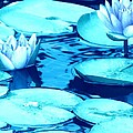 Margaret Newcomb - Waterlily Blue 1