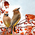 Nava  Thompson - Waxwing Are Visiting