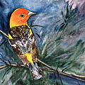 Beverley Harper Tinsley - Western Tanager at Mt....