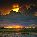Louise Hill - Wetland Sunset