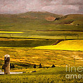 Priscilla Burgers - Wheat and Canola Fields...