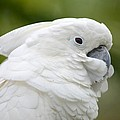 Richard Bryce and Family - White Cockatoo Profile