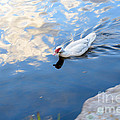 Kaye Menner - White Duck on White...