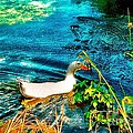 Annie Zeno - White Duck Swimming