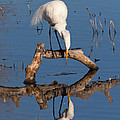 Kathleen Bishop - White Heron in the...