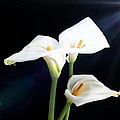 M and L Creations - White Lillies