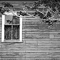 Cathie Richardson - White Lone Window