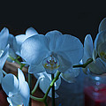 Robert Estes - White Orchids in Partial...