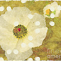 Shannon Story - White Poppy Abstract