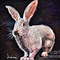 Daliana Pacuraru - White rabbit portrait...