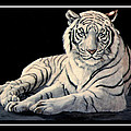 DiDi Higginbotham - White Tiger