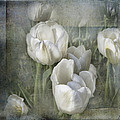 Evie Carrier - White Tulips