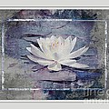 Vickie Emms - White Water Lily Pasteled
