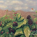 Laurie Morgan - Wild Blackberries