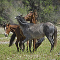 Saija  Lehtonen - Wild Horses at Play
