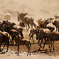 Amyn Nasser - Wildebeest Party