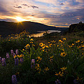 About Light  Images - Wildflowers of the Gorge