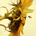 Douglas MooreZart - Will you still love bee...