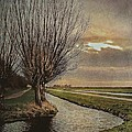 Hugo Bussen - Willow trees