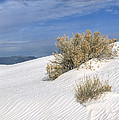Sandra Bronstein - Windswept - White Sands...