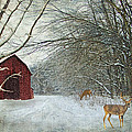 Lianne Schneider - Winter Barn