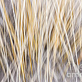 Elena Elisseeva - Winter grass abstract