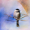 Jai Johnson - Winter Morning Chickadee