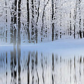 Andrea Kollo - Winter Reflections