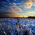 Phil Koch - Winter