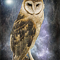 Jordan Blackstone - Wise Old Owl - Image Art...