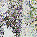 Christiane Schulze Art And Photography - Wisteria Abstract