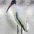 Barbara Chichester - Woodstork