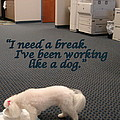 Mary Beth Landis - Working Dog