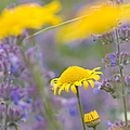 Matthias Hauser - Yellow and purple...