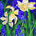 Jamie Frier - Yellow Daffs