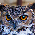 Jerry Cowart - Yellow Eyed Wise Old Owl