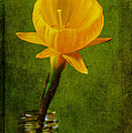 Marco Oliveira - Yellow Flower In A...