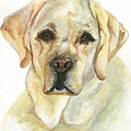 Kimberly Lavelle - Yellow Lab