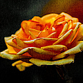 Alexander Senin - Yellow Rose 1