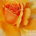 Kathleen Struckle - Yellow Rose