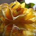 Debbie Portwood - Yellow Rose Wet and Dry