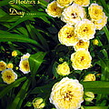 Joyce Dickens - Yellow Tea Rose  Happy...