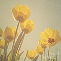 Diana Kraleva - Yellow tulips