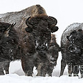 Bob Weiman - Yellowstone Family...