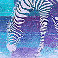 Variance Collections - Zebra Art - bp02t01