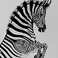 Cheryl Poland - Zebra Colt playing