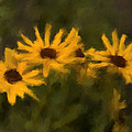 Renee Skiba - 3 Sunflowers