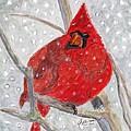Angela Davies - A Cardinal Winter