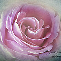 Paul and Fe Photography Messenger - A Rose in the heart of...