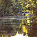 Susan Bordelon - Bayou des Glaises at Big...